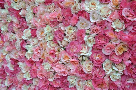 Pink Flower Wall flower wall pesquisa backgrounds