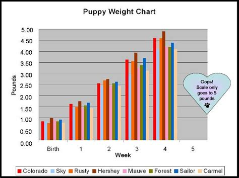 average weight of golden retrievers golden retriever weight chart dogs in our photo