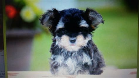greenfield puppies review top 329 reviews and complaints about greenfield puppies page 5