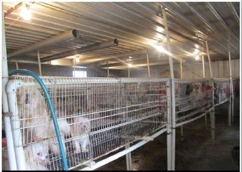 breed mass bill aimed at cracking on iowa puppy mills faces akc opposition