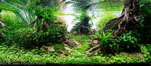 aquascape engineers 2014 aga aquascaping contest entry 197