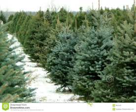 christmas tree farm royalty free stock photos image 381248