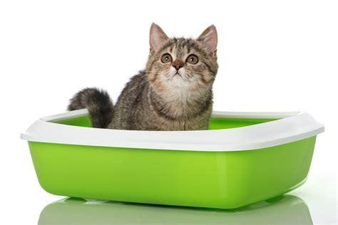 Aristo Cat Litter aristo cats 174 pine cat litter