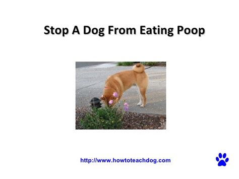 spray to stop dogs from pooping in the house stop from pooping in the house 28 images spray to stop dogs from pooping in the
