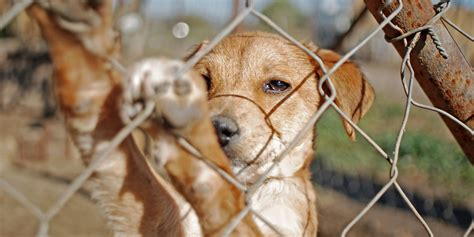 abandoned dogs pets suffer in the aftermath of natural disasters huffpost
