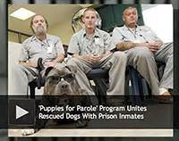 puppies for parole puppies for parole program unites rescued dogs with prison inmates