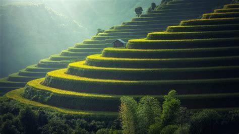 wallpaper farm terrace farming agriculture