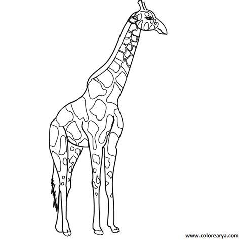 imagenes jirafas colorear dibujos para colorear de jirafa new calendar template site