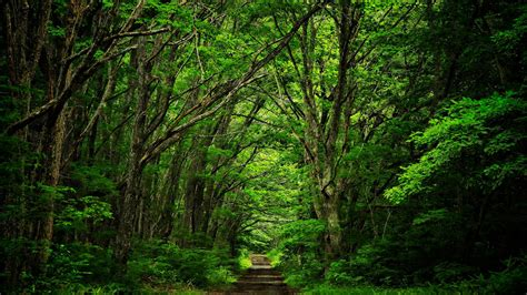 fotos para perfil naturaleza 191 volver a la naturaleza o conectarnos a la naturaleza