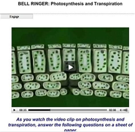 bell ringer what is the topic of umbrella by rihanna photosynthesis and transpiration bell ringer biology