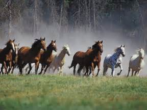 Horses free stock photos free stock photos