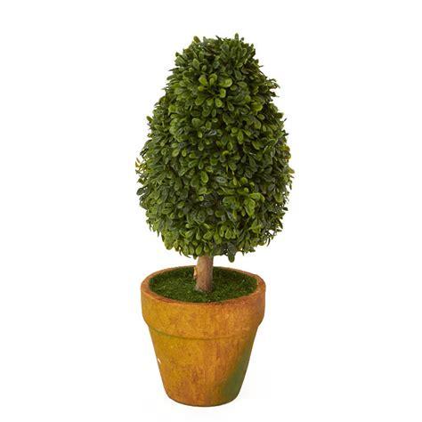 small boxwood topiary plant decorative accents primitive decor