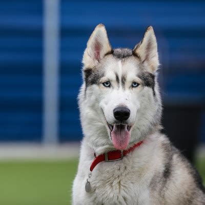 dogs picture rehoming gallery battersea dogs cats home