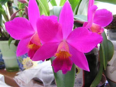 fiore di orchidea fiori orchidea fiori di piante i fiori ddell orchidea