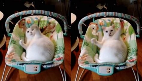 cat swing cat has more fun with baby swing than actual baby love meow