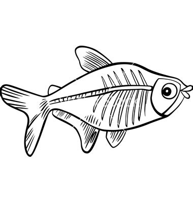 X Ray Tetra Clipart 8 X Fish Coloring Page