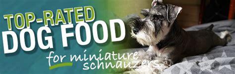 best food for miniature schnauzer puppy what is the best food for a miniature schnauzer