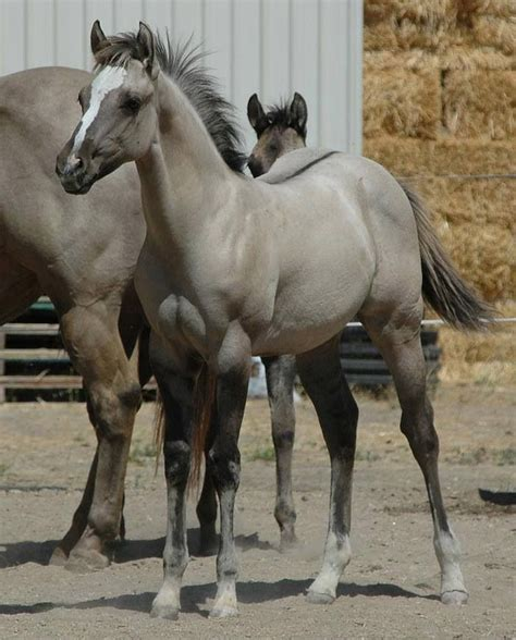 grulla color 204 best images about g is for grulla on