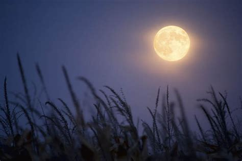 harvest moon  autumn full moon  rare appearance