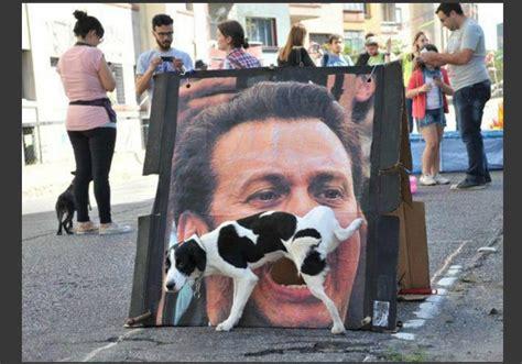 imagenes sorprendentes tomadas en el momento exacto fotos graciosas de perros tomadas en el momento exacto