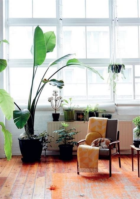 Living Room Corner Plants On The Edge Of The The Alchemy Of Plants Awakening