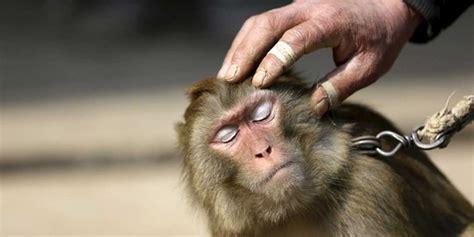 Tiga Puluh Enam Kasus Pemasaran Asli Indonesia kisah lima hewan dibui akibat ganggu manusia merdeka