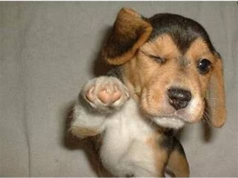 cheer up puppy 20 dogs that are sure to cheer you up