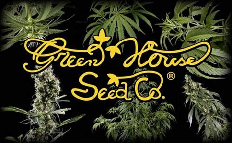green house seed co buy fresh greenhouse seed company feminised cannabis seeds here in stock right now we