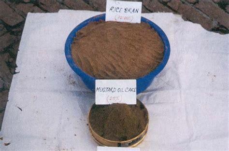 Bibit Azolla Microphylla Medan kolamazolla membuat pakan pelet dari azolla