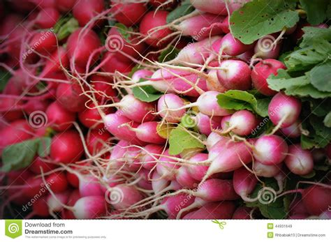 red pink and white radishes stock photo image 44931649