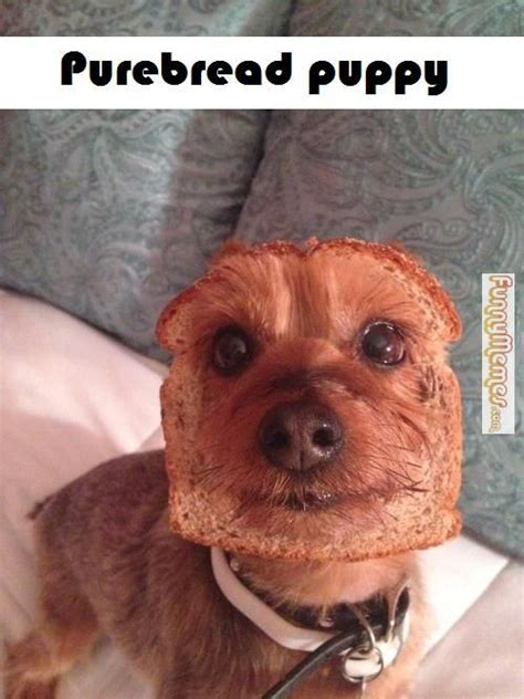 cute puppies funny memes google search cute animals