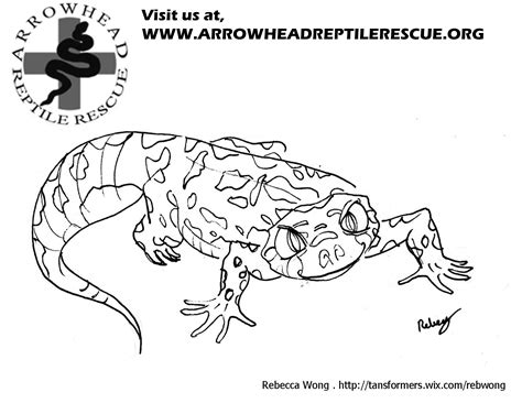 Good Gecko Coloring Page With Gecko Coloring Page Gecko Insect Coloring Page