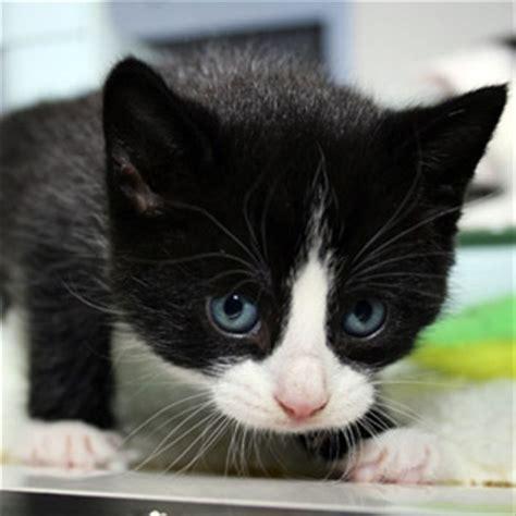 black and white cat black and white kitten postman pat social