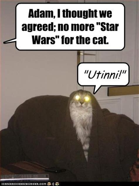 Meme Comic Jawa - jawa cat star wars catsstar wars cats