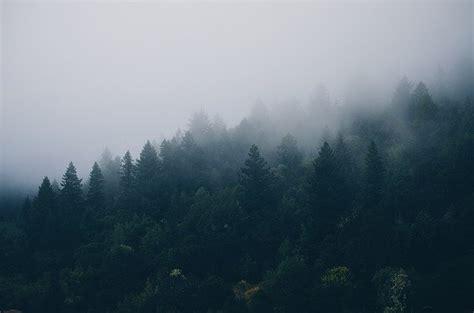 photo trees fog forest forrest mist  image