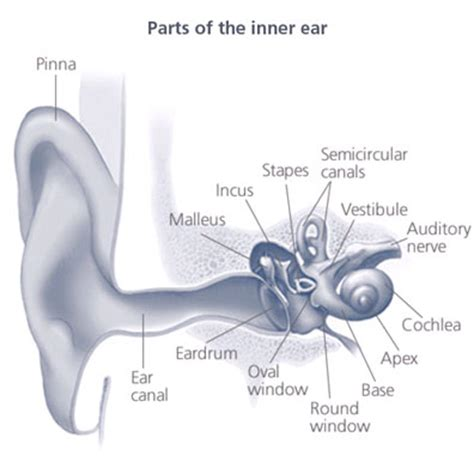 sections of the ear saline audiology 187 hearing aids