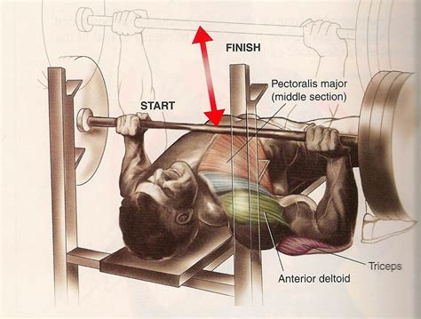 perfect bench press form most common workout mistakes committed by men all in all