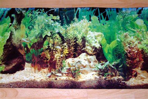 background aquarium aquarium background scenes background desktops pics