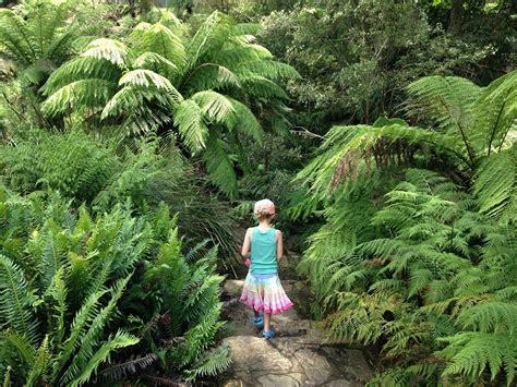 australian national botanic gardens cafe garden ftempo