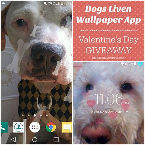 Dog Giveaway - valentine s day dog app for your smartphone giveaway pawsitively pets