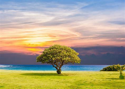 tree sea grass  photo  pixabay