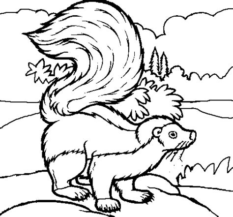 Skunk Coloring Page Skunk Coloring Pages
