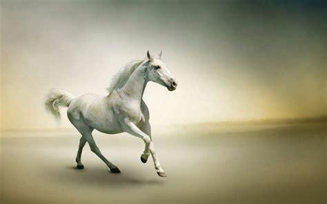 Home Design Story Apk by More Than 50 Super Beautiful Horse Photographs Decor10 Blog