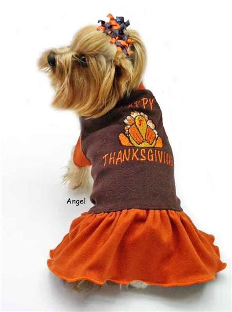 cute dogs alert pics   happy thanksgiving cheer