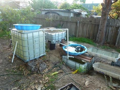 Aquaponics Backyard by Quotes On Backyard Aquaponics