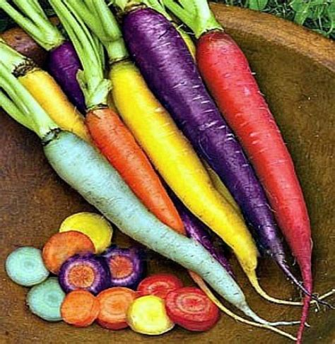Bibit Wortel jual beli benih carrot rainbow bibit carrot rainbow