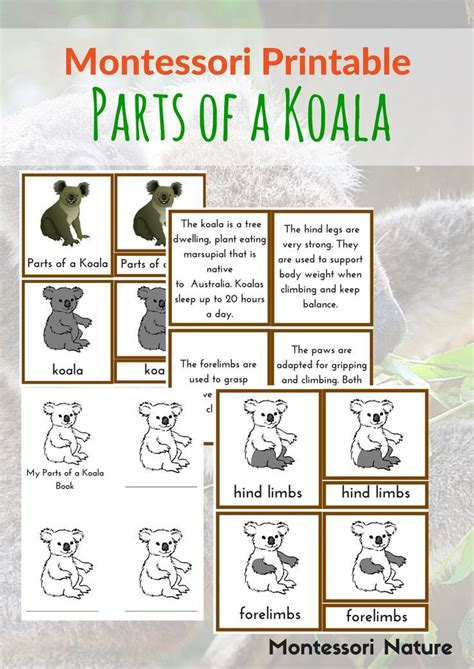 montessori printables for toddlers 10 images about australia for kids on pinterest wombat