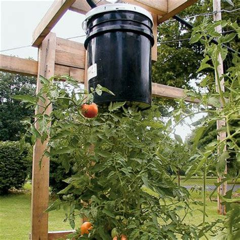 How To Make A Hanging Tomato Planter by 17 Best Images About Tomatos On Gardens The