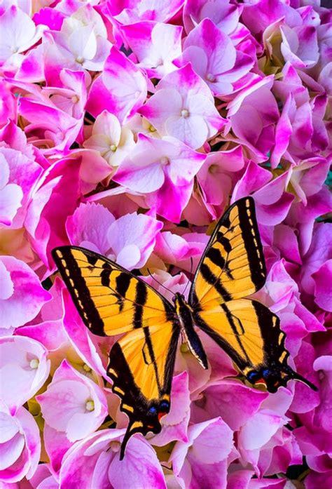imagenes flores mariposas cuadros pinturas oleos imagenes de flores con mariposas
