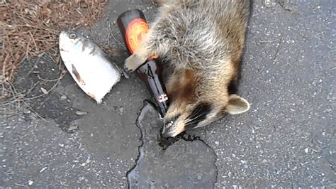 how to a to play dead kickflip dead raccoon and fish